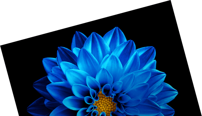 Blu Ivy Employer Branding Examples and Case Study with Blue Flower